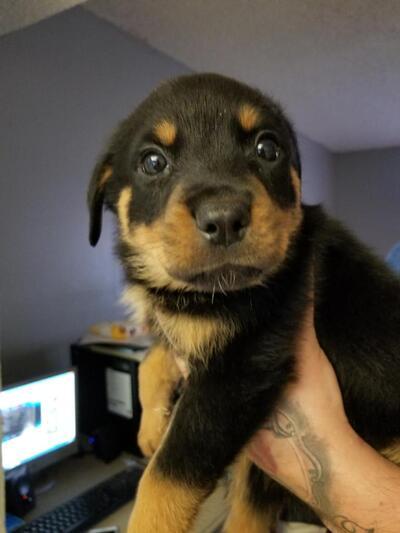 Miami Herald | Classifieds | Pets & Animals