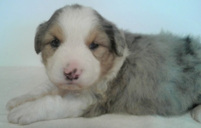 Columbia The State | Classifieds | Pets & Animals