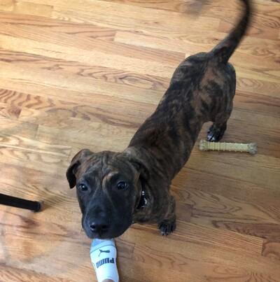 Kansas City Star | Classifieds | Dogs